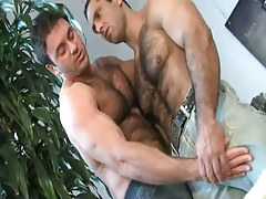 Mature hairy men caress each other