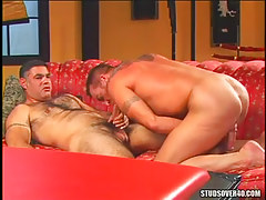 Bear gay sucked by mature man
